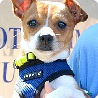 Adopt A Pet :: Arnie - Tunica, MS