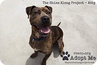 Pit Bull Terrier Mix Dog for adoption in Fincastle, Virginia - Abby
