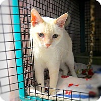 Adopt A Pet :: Braveheart - Lakewood, CO