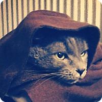 Adopt A Pet :: Obi Wan - Montgomery City, MO