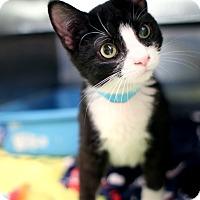 Adopt A Pet :: Snowplow - Appleton, WI