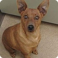 Adopt A Pet :: Rojo - Las Vegas, NV