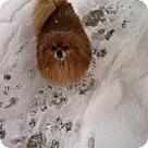 Adopt A Pet :: Brutus (COURTESY POST)