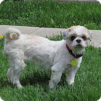 Adopt A Pet :: Zoe - Toronto, ON