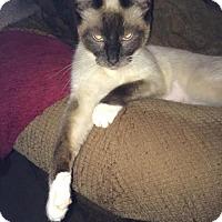 Adopt A Pet :: Penny - DFW Metroplex, TX
