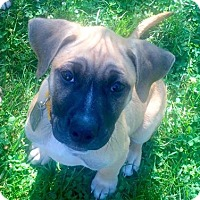 Adopt A Pet :: Giorgio - Dayton, OH