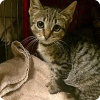 Adopt A Pet :: Cheri - East Brunswick, NJ