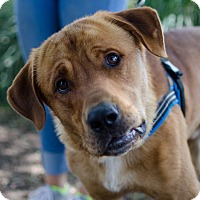 Adopt A Pet :: Andre - Greenwood, SC