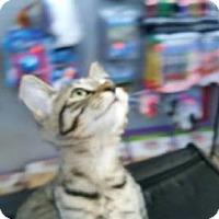 Adopt A Pet :: JOY - Ridgewood, NY