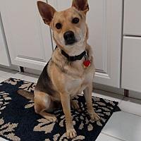 Adopt A Pet :: Selma - LANSING, MI