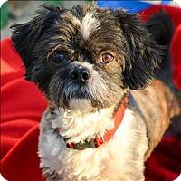 Adopt A Pet :: Alf - Vallejo, CA