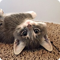 Adopt A Pet :: Ruby - Troy, MI