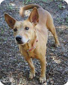 Labrador Retriever Mix Dog for adoption in Yukon, Oklahoma - Elsa