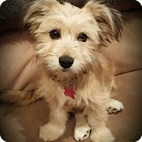 Adopt A Pet :: Bailey - Thousand Oaks, CA