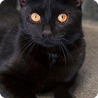 Adopt A Pet :: Wrangler - Manahawkin, NJ