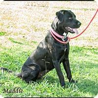 Adopt A Pet :: Maddie - Ada, OK