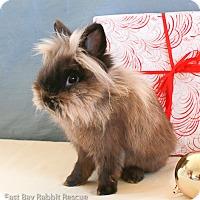 Adopt A Pet :: Aldo - Livermore, CA
