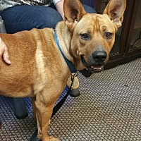 Adopt A Pet :: Scrappy - Gainesville, GA
