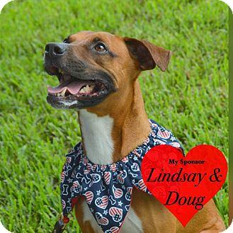 Boxer Mix Dog for adoption in San Leon, Texas - Hobby