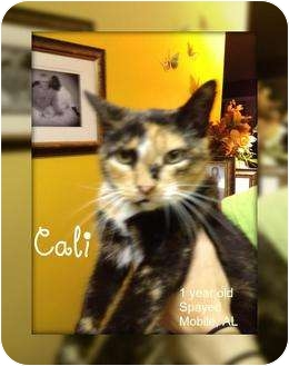 Calico Cat for adoption in Mobile, Alabama - Cali
