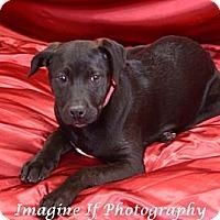 Adopt A Pet :: Cleo - Blanchard, OK