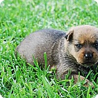 Adopt A Pet :: TALI - Torrance, CA