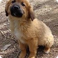 Adopt A Pet :: Chipper - Staunton, VA