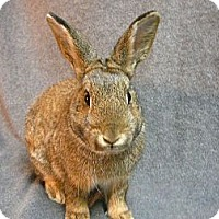 Adopt A Pet :: Aubry - Newport, DE