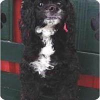 Adopt A Pet :: Allie - Sugarland, TX