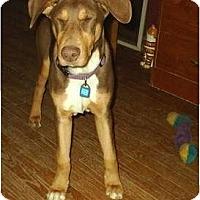 Adopt A Pet :: Lenny - cedar grove, IN