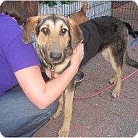 Adopt A Pet :: Joann - Alexandria, VA