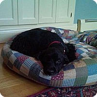Adopt A Pet :: Gabi - PENDING, in Maine - kennebunkport, ME