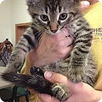 Adopt A Pet :: Keifer - Byron Center, MI