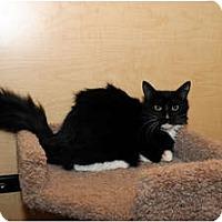 Adopt A Pet :: Presley - Farmingdale, NY