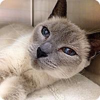 Adopt A Pet :: Juanita - Foothill Ranch, CA