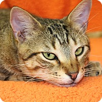 Adopt A Pet :: Magic - Bonita Springs, FL