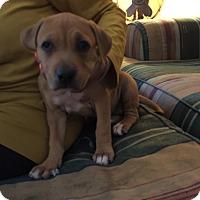 Adopt A Pet :: Lilah - Hollywood, FL