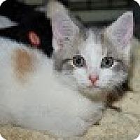 Adopt A Pet :: Sorbet - Berkeley Hts, NJ