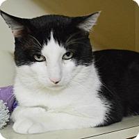 Adopt A Pet :: Sal - Parkville, MO