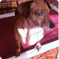 Adopt A Pet :: Danny - Georgetown, KY