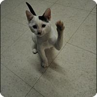 Adopt A Pet :: Dexter - Rockaway, NJ