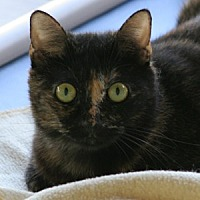 Adopt A Pet :: Betthany - North Fort Myers, FL