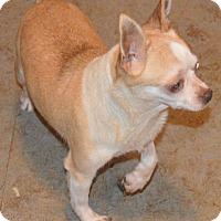Adopt A Pet :: Mona - Prole, IA