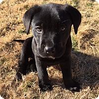 Adopt A Pet :: Ryder - Bedford, TX