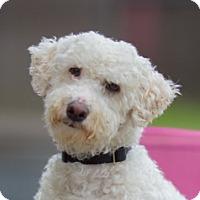 Adopt A Pet :: Wobbles - Vacaville, CA
