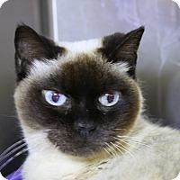 Adopt A Pet :: Elizabeth - Sarasota, FL