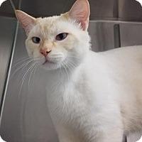 Adopt A Pet :: Channing - Umatilla, FL