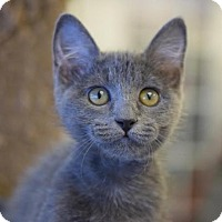 Adopt A Pet :: Tori - DFW Metroplex, TX