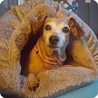 Adopt A Pet :: Francesca - Decatur, GA