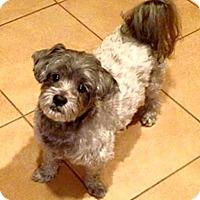 Adopt A Pet :: Beau - Jacksonville, FL